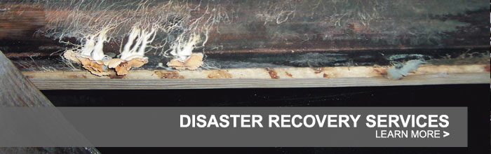 We are the Texas Disaster Restoration Experts!
